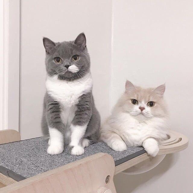 cats images