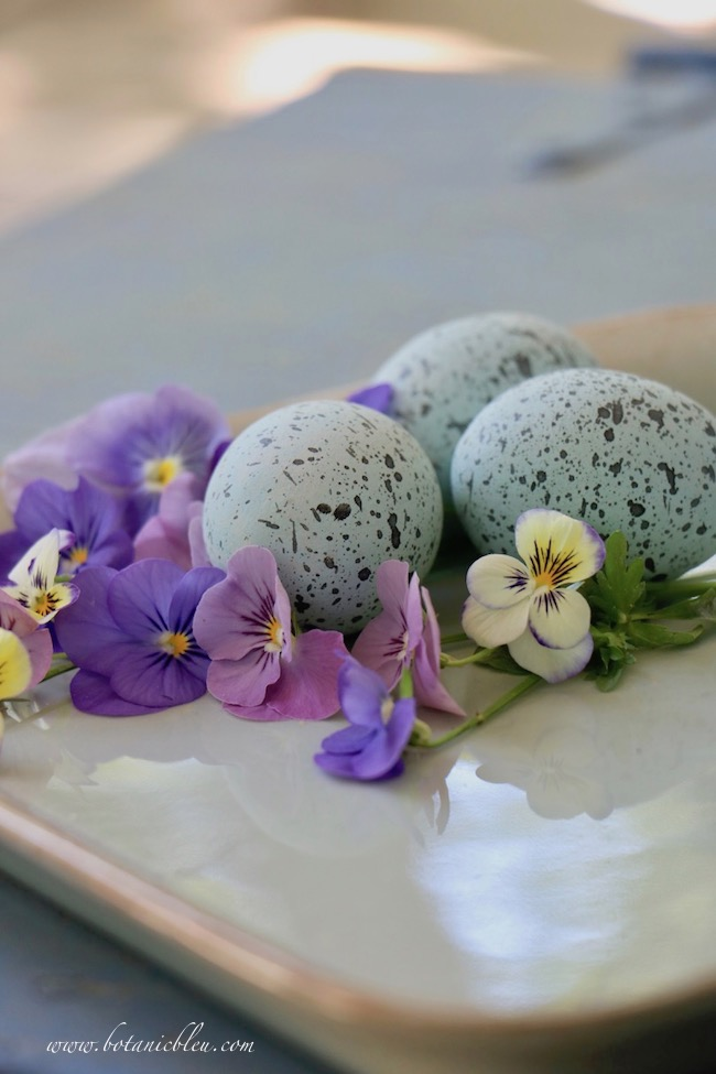 Spring pansies nestled with bird eggs offer moments of pure joy