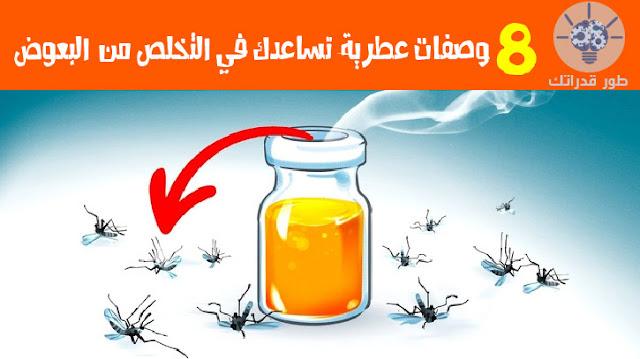 8 وصفات عطرية  تساعدك في التخلص من البعوض