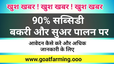 90% Subsidy on Goat, Sheep & Pig Farming
