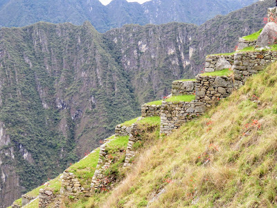 Machu Picchu Images: Picture of a terraced farm at Machu Picchu in Peru
