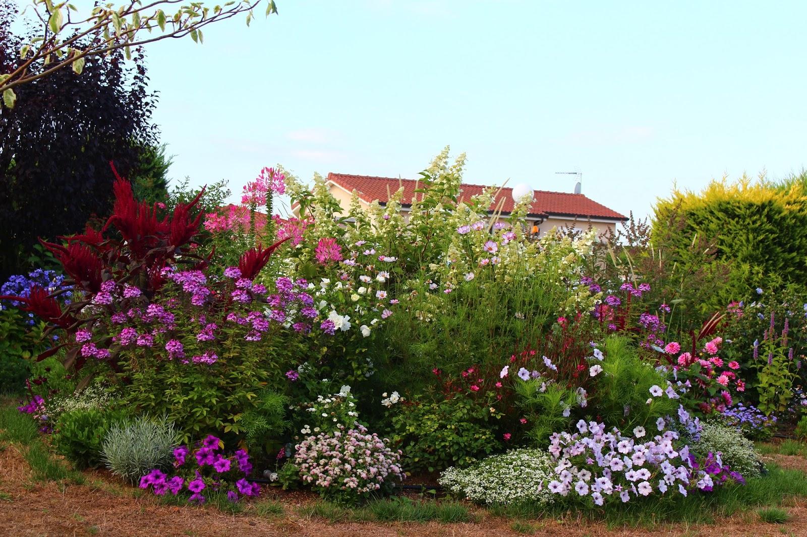 roses du jardin ch neland fleurs de l 39 t 2015. Black Bedroom Furniture Sets. Home Design Ideas
