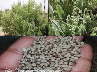 नेगड़ का पौधा
