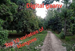 आम की टॉप दस किस्में varieties of Mango, जिनका उत्पादन और मार्केट डिमांड ज्यादा और लागत कम।