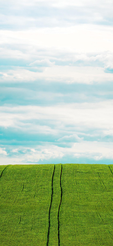خلفية الحقل الأخضر تحت السماء المشرقة