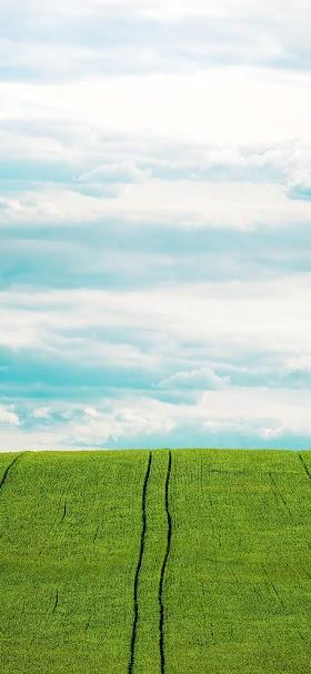 خلفية حقل العشب الأخضر تحت السماء المشرقة