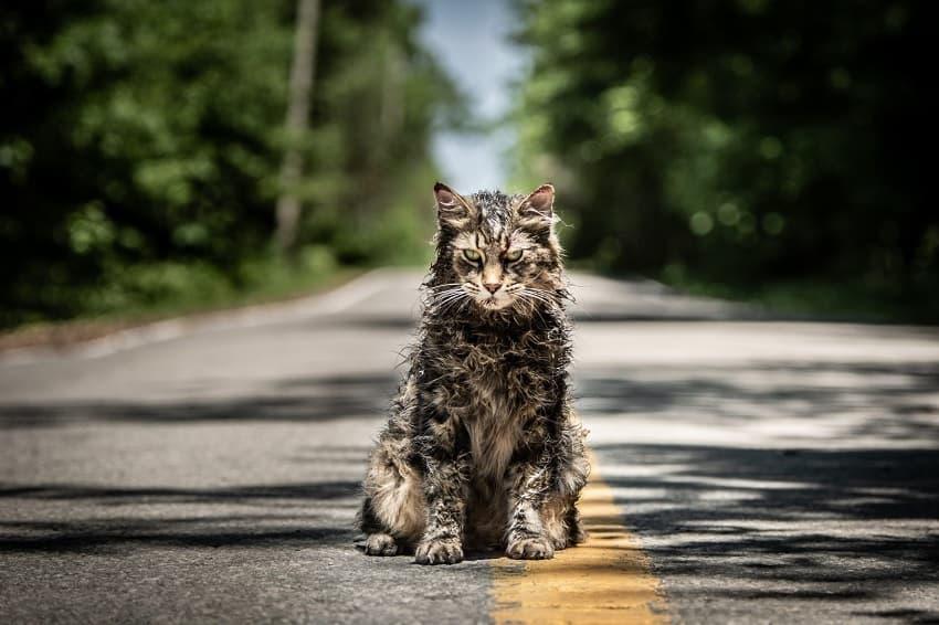 Paramount+ нашёл режиссёра для фильма ужасов «Кладбище домашних животных 2»