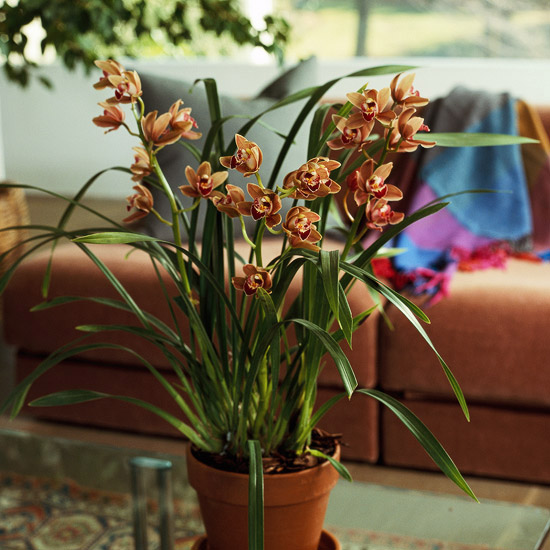 Air purifying plants easy to grow orchids for indoors for Orchidee da esterno