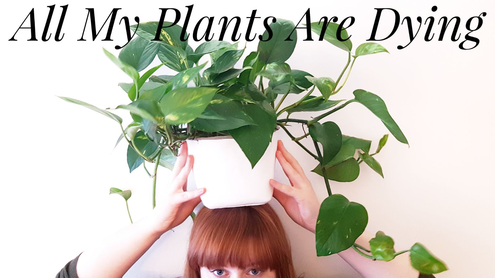 How I'm trying to stop my plants dying