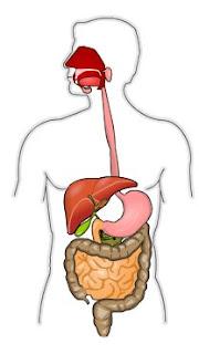 http://www.xtec.cat/~rvillanu/digestiu/digestiu.htm