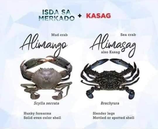 Alimango (Mud Crab) / Alimasag Sea Crab)  Kasag