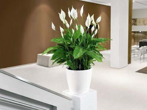 planta espatifilo decorar hogar interior