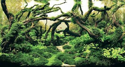 Aquascape Hutan Terindah