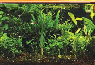 desain aquascape gaya eropa