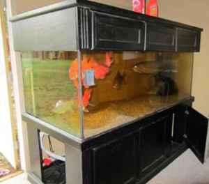 aquarium for sale on craigslist - 150 Gallon Fish Tank For