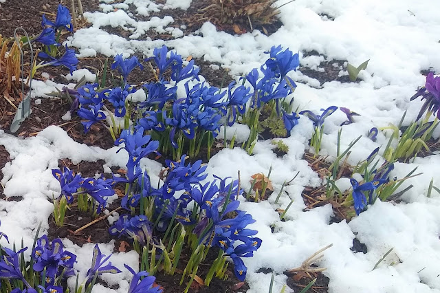 Spring snow....and a rant