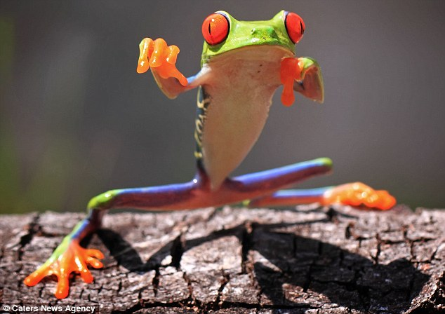 Cute Baby Pigs Wallpaper Kung Fu Frog 2 Pics Amazing Creatures
