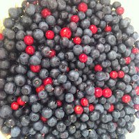 Blueberries and Lingon Berries in Sweden with Appetit Voyage