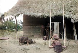 anak gadis dan hewan ternak mereka