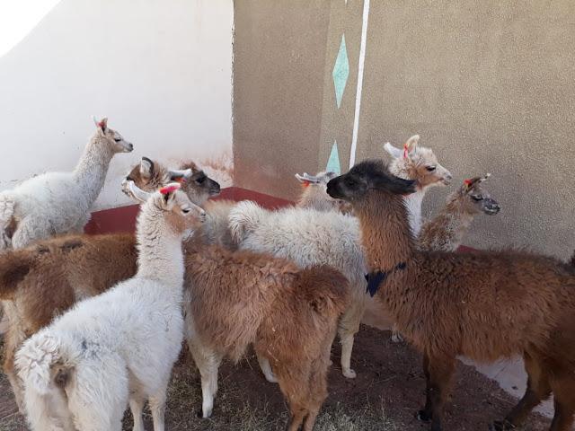 Tierische Kirchenbesucher
