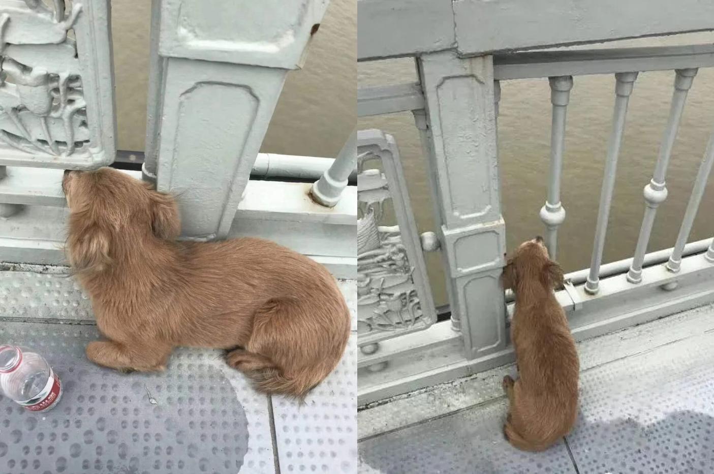 El perro pasó días enteros esperando a su amo en el mismo puente donde se suicidó