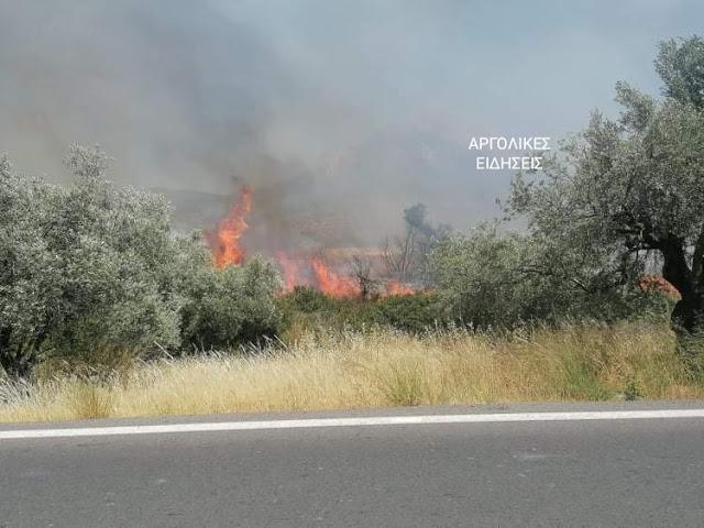 Αργολίδα: Πυρκαγιά σε ρέμα στον Άγιο Αδριανό Ναυπλίου