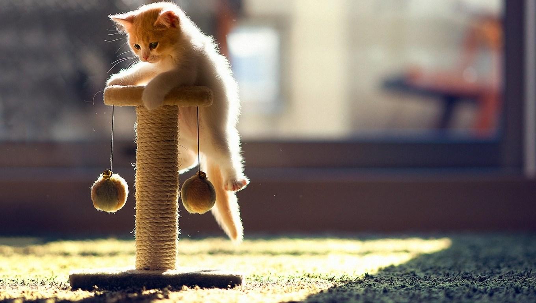 Bir Kedi Sahiplenmeden Önce Bilmeniz Gereken 6 Şey
