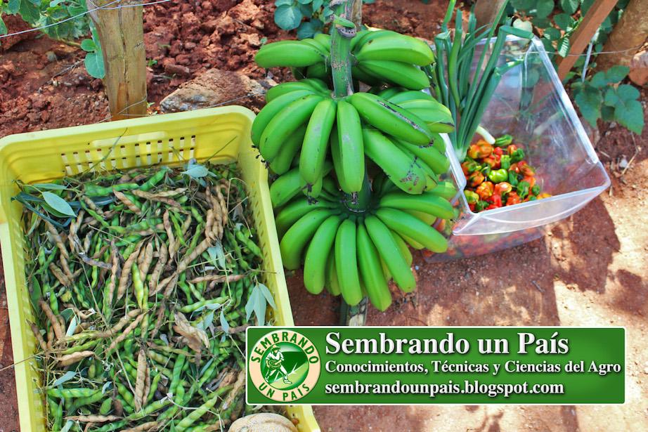 alimentos producidos sin agroquímicos