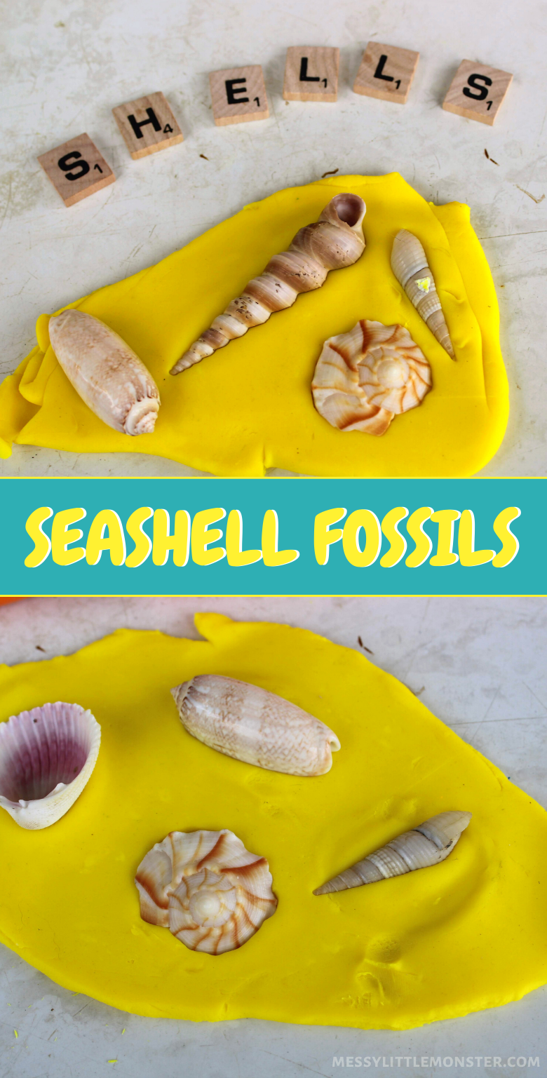 Seashell fossils. Making playdough fossils is a fun summer activity for toddlers and preschoolers.