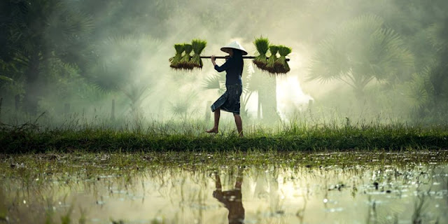 Petani Dan Mindset Pejabat Kita