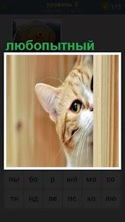 Из - за угла выглядывает любопытная кошка, только одна морда