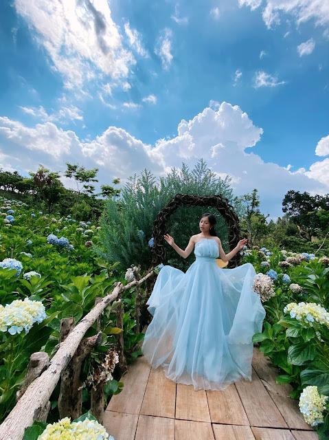 Vườn hoa cẩm tú cầu Đà Lạt
