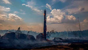 RainForest: Amazon close to irreversible Fire Area