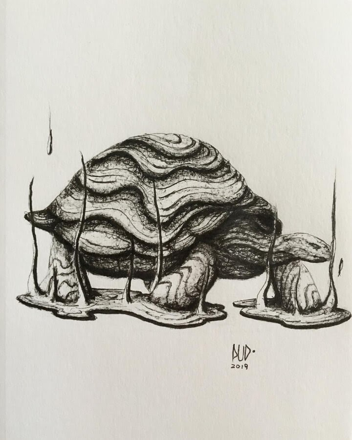 13-Tortoise-Pud-www-designstack-co