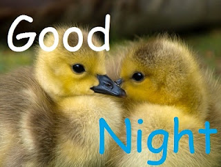 good night pic cute baby bird