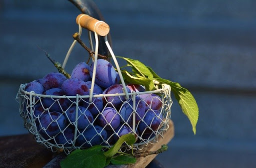 buah plum untuk diet
