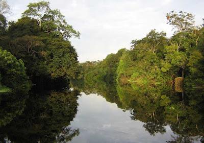 Extrativista desaparece na mata da Resex do Rio Ouro Preto