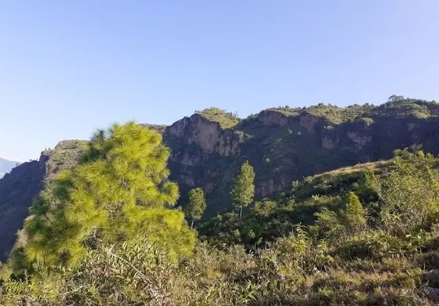 Gwallek Forest