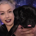 Seth Meyers Interview Phoebe Bridgers and Her Dog