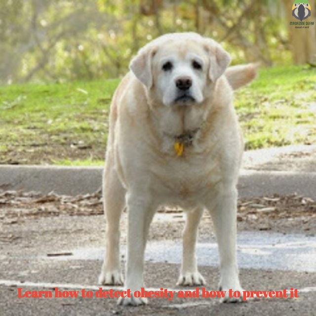Do I have an obese dog Learn how to detect canine obesity and how to prevent it