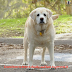 Do I have an obese dog? Learn how to detect canine obesity and how to prevent it