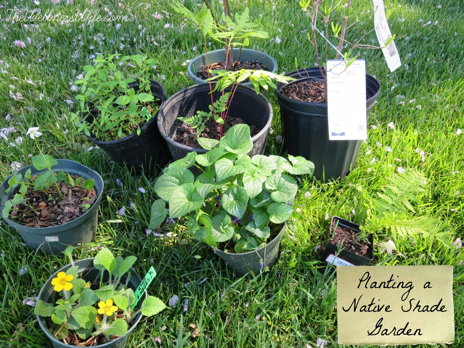 Planting a Shade Garden, shared by The Wellness Wife