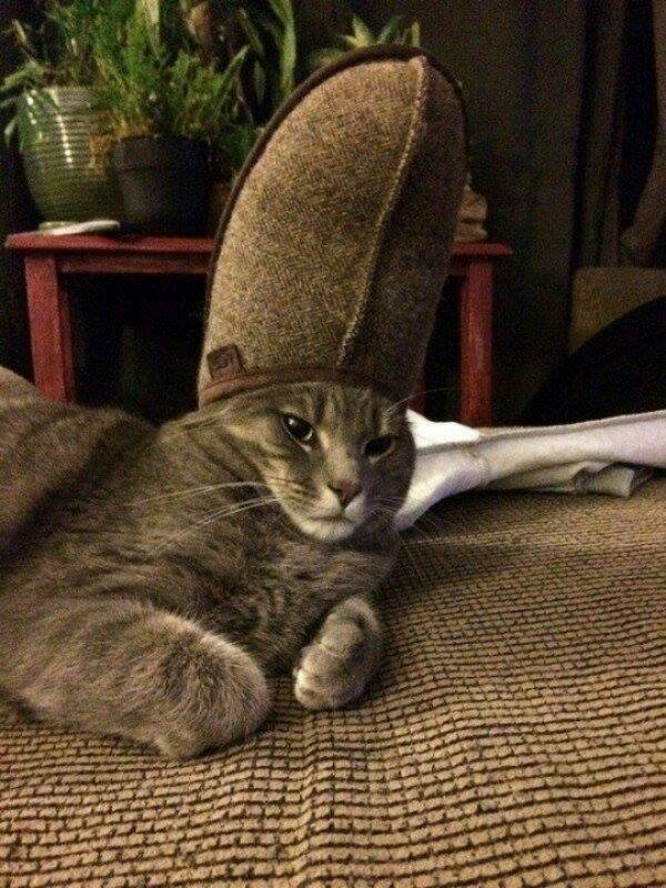 Funny cats - part 231, best funny cats, cat photo, adorable cat picture