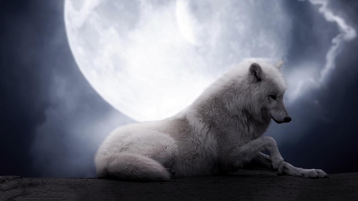 Wallpaper Hd Wolf