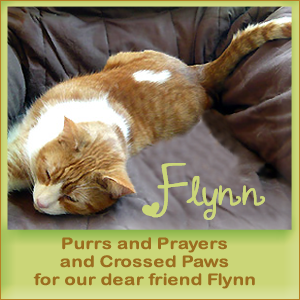 Purrs for our pal Flynn