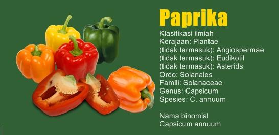 Kandungan dan Manfaat Paprika Hijau untuk Kesehatan