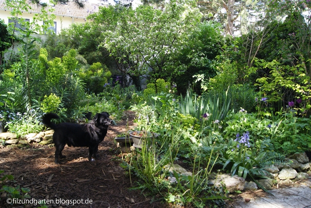 Gärtnern ohne Pflanzenkauf