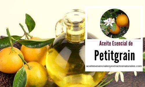 El aceite esencial de Petitgrain o naranja amarga se obtiene de las hojas y de las ramitas del mismo árbol
