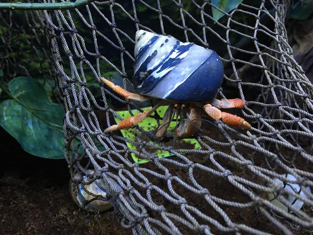 Hermit Crab Cottage Hermit Crab Climbing Object Ideas