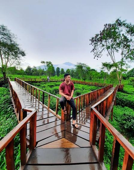wisata hits kebun teh wonosari malang